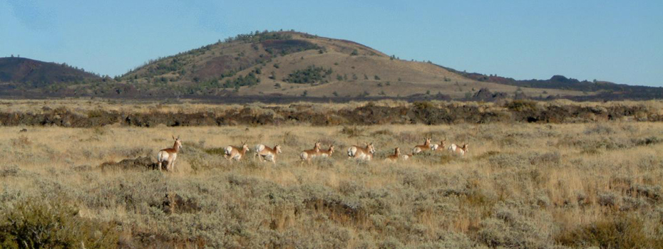 pronghorn_herd_001_craters (unknown)