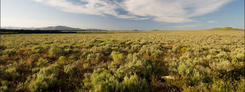 laidlaw_sagebrush_steppe (unknown)